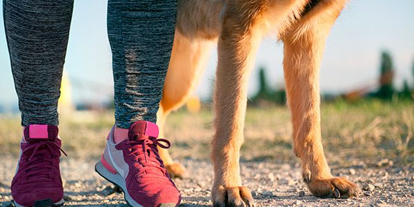 Close up of a person's feet in running shoes and a dogs paws on a path